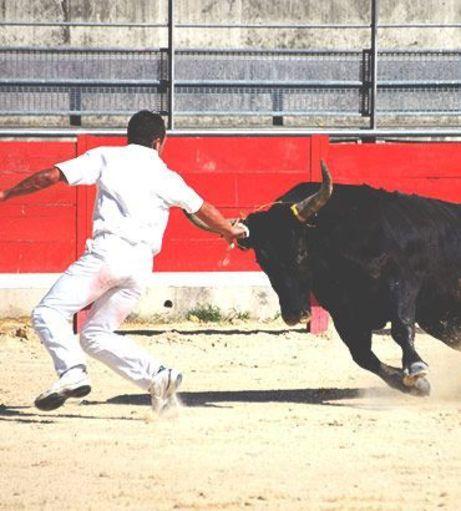 Stag Weekends - Adrenaline Activities - Baby Bull Running