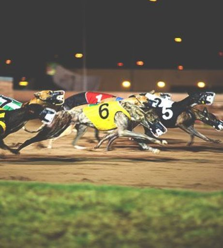 Stag Weekends - Fancy a Flutter - Night at the Dogs