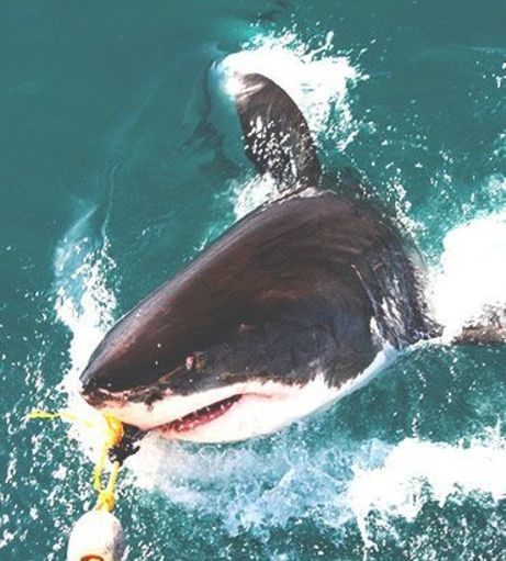 Albufeira Stag Party Packages - Shark Fishing