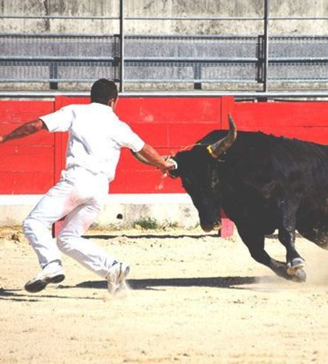 Madrid Stag Do Ideas - Baby Bull Running