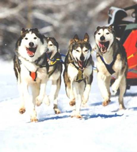 Poznan Stag Party Packages - Husky Sledges