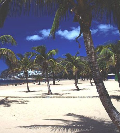 Palm trees on a white sandy beach. Discover Tenerife Stag Party ideas below: